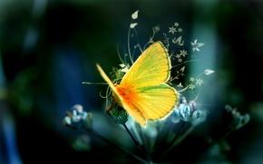 Обои Бабочка, Узор, Желтая