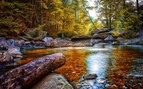 Картинка осень, лес, деревья, ручей, камни