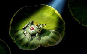 Картинка лилия, поцелуй, корона, царевна лягушка