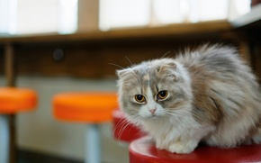 Картинка кошка, кот, усы, морда, комната, стул