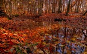 Обои осень, лес, деревья, ручей, листва, речка