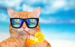 Обои beach, funny, drink, summer, cat, glasses, vacation