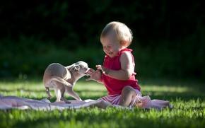 Картинка трава, настроение, собака, ребёнок
