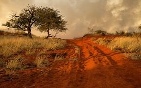 Картинка дорога, песок, трава, дерево, холмы, Африка, Намибия