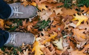 Картинка осень, листья, кеды, шнурки, дуб, дубовые