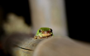 Картинка глаза, лягушка, зеленая, смотрит
