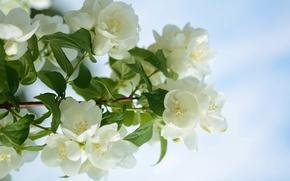 Картинка листья, свет, цветы, ветки, дерево, Весна