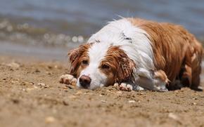 Картинка лето, собака, мокрая