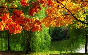 Картинка осень, природа, река, фото, листва, Лес