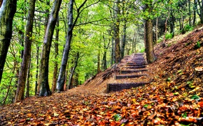 Обои leaves, trees, forest, park, steps, autumn, walk, hdr, nature