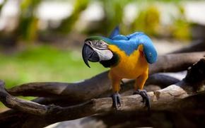 Картинка parrot, macaw, bokeh, eye, branches, paws, beak