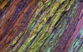 Картинка дерево, цвет, текстура