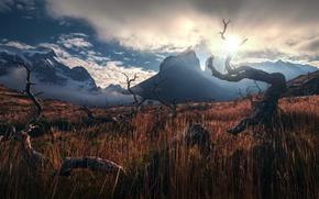 Картинка небо, трава, солнце, горы, Анды, ламы, коряги, Патагония, обои от lolita777