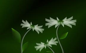 Обои flower, color