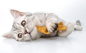 Картинка кошка, игра, домашнее животное, пол, зверь, кот