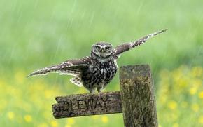 Картинка дождь, птица, забор