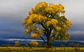 Картинка поле, осень, небо, тучи, дерево