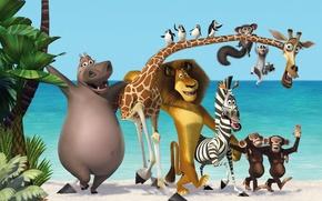 Обои new, пальмы, мадагаскар, madagascar 3, обезьяны, пингвины, бегемот, мультфильм, море, три, зебра, новый, лев, жираф