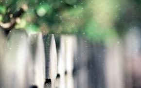 Картинка зелень, забор, фокус, деревянный, кусты, snow, fence, время года, боке, снежок, пора, первый снег