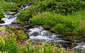 Обои цветы, кусты, мох, зелень, ручей, трава, Mount Rainier National Park, камни, США