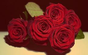 Обои roses, red rose, love, in love,  romantic, romance, gift, present