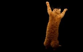 Картинка кот, радость, рыжий