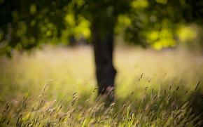 Обои дерево, трава, поле