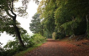 Картинка Осень, Лес, Листва, Дорожка, Autumn, Road, Forest, Leaves