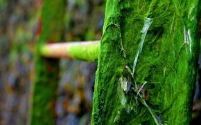 Картинка зеленый, лестница, тина