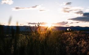Картинка куст, поле, силуэт, машина, холмы, солнце, небо, трава, облака, закат