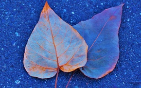 Картинка осень, асфальт, листья, краски