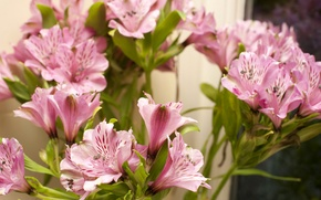 Картинка pink, flowers, Альстрёмерия, Alstroemeria