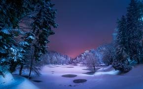 Обои деревья, озеро, снег, Ночь