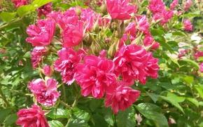 Картинка лето, цветы, июль