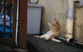 Картинка кот, котэ, мусорка, припух, объелся