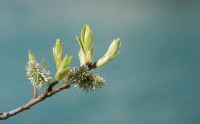 Картинка листья, природа, ветка, стебель, почки, nature, leaves, branch, buds, stalk