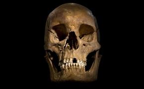 Картинка skull, bones, yellow, human skull