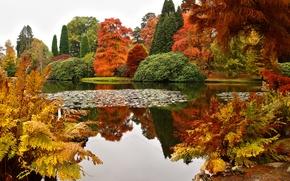 Обои дизайн, пруд, осень, Великобритания, Sheffield Park Gar, кусты, деревья, парк, красота