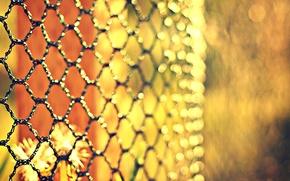 Картинка цветы, сетка, забор, размытость, металлическая, боке