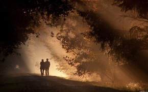 Обои лес, парк, Вечер, прогулка, сумерки, двое