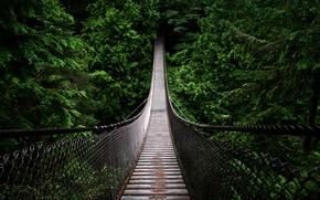 Картинка лес, мост, яма