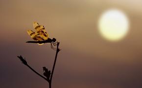 Картинка sunset, silhouette, Dragonfly