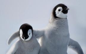 Обои дружба, пингвин, антарктика, птица