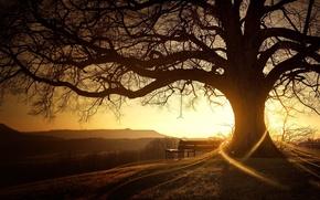 Обои восход, солнце, дерево