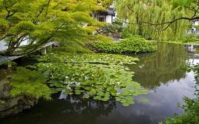 Картинка ветки, природа, пруд, фото, сад, кувшинки
