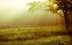 Картинка зелень, трава, листья, солнце, свет, деревья, пейзаж, природа, фон, дерево, widescreen, обои, луг, wallpaper, листочки, …