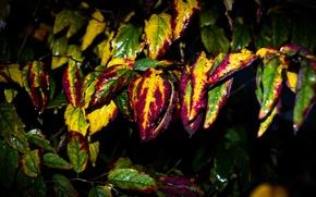 Картинка листья, крупный план, природа