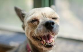 Картинка морда, друг, собака, нос, пёс