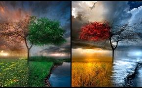 Обои дерево, природа, времена года, природная красота, место