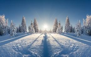 Обои winter, snow, nature, лес, елка, снег, зима